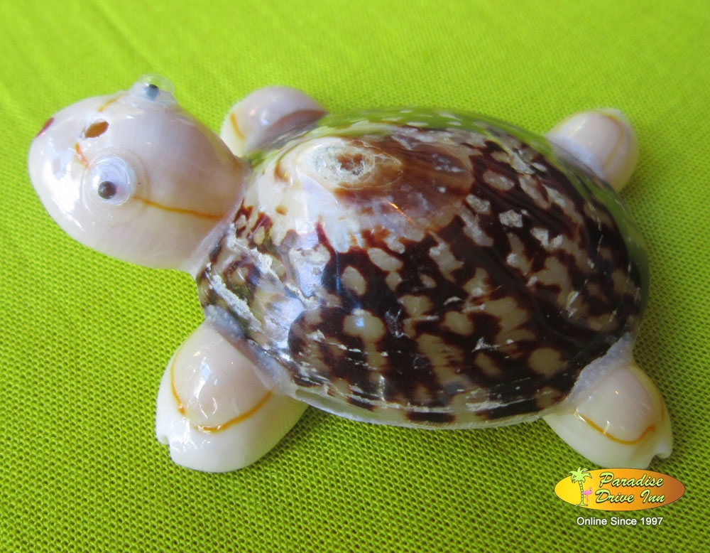 Bali Assortment of 50 shell turtles
